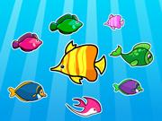 Colorful Fish Matching