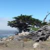 Monterey Jigsaw