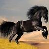 Puzzles Horses